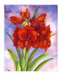Amaryllis Prints by Jane Edwards