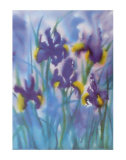 Irises I Prints by Fay Powell