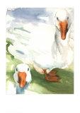 Gänse Kunstdruck von Paula W. Patterson
