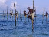 Stilt Fishermen at Welligama, South Coast, Sri Lanka, Indian Ocean, Asia Photographic Print by Bruno Morandi