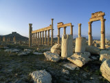 The Archaeological Site, Palmyra, Unesco World Heritage Site, Syria, Middle East Photographic Print by Bruno Morandi