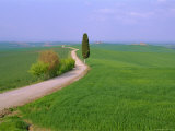 Narrow Road Through Countryside Near Siena, Tuscany, Italy Photographic Print by Bruno Morandi