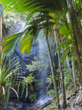 Waterfall, Vallee De Mai National Park, Praslin, Seychelles, Indian Ocean Reproduction photographique par J P De Manne