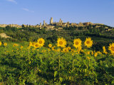 San Gimignano and Field of Sunflowers, Tuscany, Italy Photographic Print by Bruno Morandi