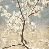 Cerisiers en fleurs I Affiches par John Seba