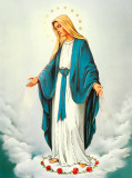 Immaculate Conception Plakater
