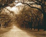Savannah Oaks I Prints by Alan Hausenflock