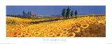 Yellow Fields, Tuscany Posters av John Horswell