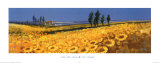 Yellow Fields, Tuscany Posters by John Horswell