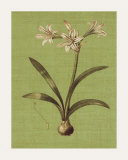 Botanica Verde I Prints by John Seba