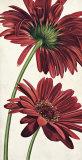 Armonie in Rosso Plakater af Eva Barberini