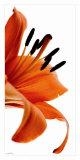 Fleur de Lys Affiche par Guillaume Plisson