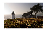 Wildflowers and The Lighthouse Photographic Print by George Oze