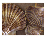Seashells Spectacular No 7 Photographic Print by Ben & Raisa Gertsberg