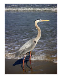 Creatures of the Gulf - Ankle Deep & Focused Photographic Print by Lucyna A M Green