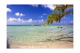 Crystal Clear Caribbean Waters Cayman Islands Photographic Print by George Oze