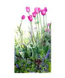 Tulip Garden Giclee Print by Cindy Gilbane