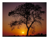 Sunrise and Oak Photographic Print by Auralee Dallas