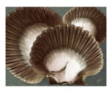 Seashells Spectacular No 22 Photographic Print by Ben & Raisa Gertsberg
