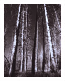 Ghost Forest Photographic Print by Auralee Dallas