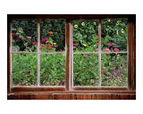 Summer Garden Thru a Rustic Window Photographic Print by Anna Maria Miller