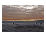 Frosty Sunrise Photographic Print by Jennifer Norland