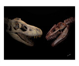T- Rex vs Allosaurus Photographic Print by TRAY MEAD