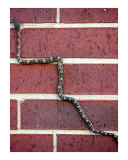 Snaking Up A Brick Wall Photographic Print by Lucyna A M Green