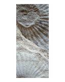 Fossil Three Fotodruck von A Villaronga
