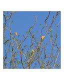 Dezine Zone - Yellow Baobab Flowers Fotografická reprodukce
