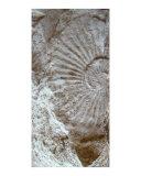 Fossil One Fotodruck von A Villaronga