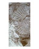 Fossil One Photographic Print by A Villaronga