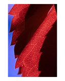 Red Leaf Blue Sky Photographic Print by Jeanne Apelseth