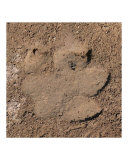 Hippo Footprint Photographic Print by Dezine Zone