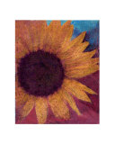 Sunflower in Blue Giclee Print by Jeanne Apelseth