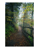 The Path That Beckons Photographic Print by Anne Gregory