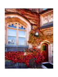 Autumn Ivy Princeton University New Jersey Photographic Print by George Oze