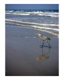 Creatures of the Gulf - Hunkering Down Photographic Print by Lucyna A M Green