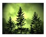 Green Sky Evergreens Photographic Print by Gene Cyr