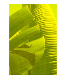 Banana Lime II Photographic Print by Florene 