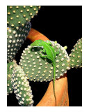 Anole Hanging Out With Cactus Photographic Print by Lucyna A M Green