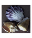 Seashells Spectacular No 30 Photographic Print by Ben & Raisa Gertsberg