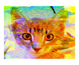 Orange Eyed Tabby Giclee Print by Randi Bailey