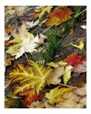 Fall Leaves Photographic Print by Robert Sicotte