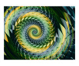 Nautilus 5 Photographic Print by Vicky Brago-Mitchell