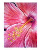 Red Hibiscus Giclee Print by Rs Wadle