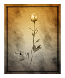 Yellow Rose Photographic Print by Tom Mcnemar