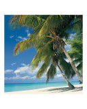Queen Palms on Seven Mile Beach Photographic Print by Anne Flinn Powell