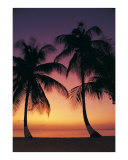 Sunset Palms Photographic Print by Anne Flinn Powell