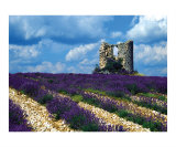 Mill Ruins at Domaine du Chateau du Bois Photographic Print by Yvonne Mestre